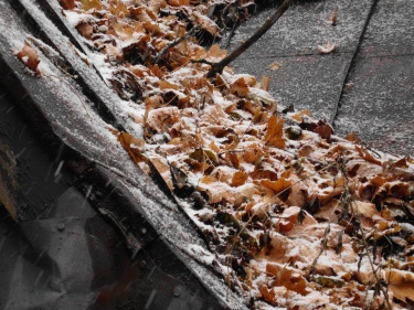 snow_on_leaf_on_roof