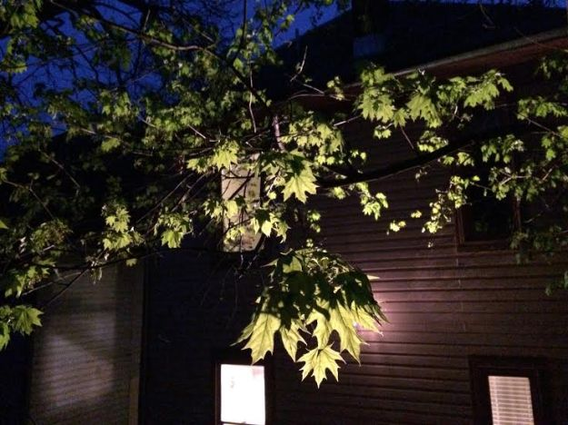 leaves in floodlight
