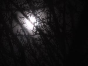 moonlightx