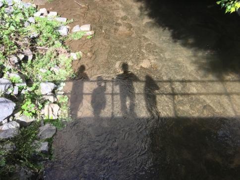 creekstilllife