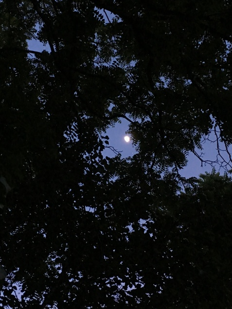 walnut moon