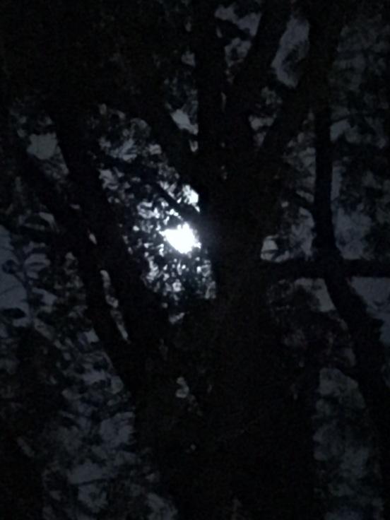 moonandtree